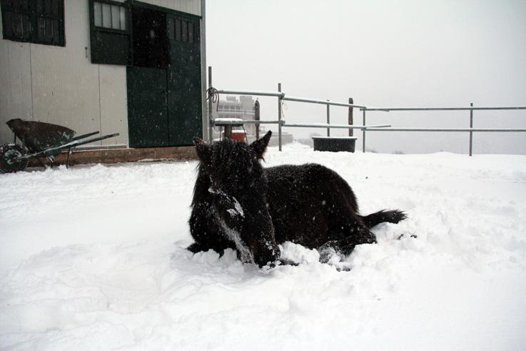 Η χιονισμένη Ιερά Μονή στο Τρίκορφο - Πλούσιο φωτογραφικό..